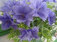 Dublin blue 7