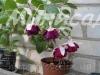 Botanische Garten Hamborn N78