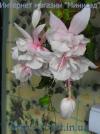 Pink Marshmollon №27