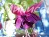 Purple Rain N77